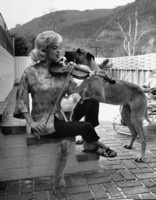 Jayne Mansfield picture G306478