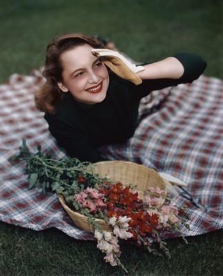 Olivia de Havilland poster G310377