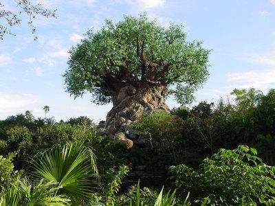 Tree poster G318113