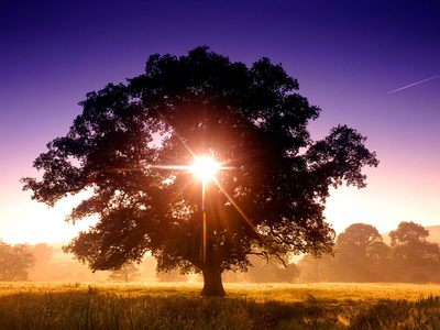 Tree poster G318115