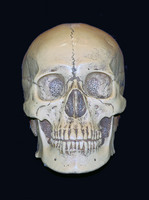 Skull picture G318116