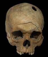 Skull picture G318118
