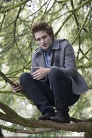 Edward Cullen picture G318542