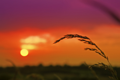 Sunset poster G318602