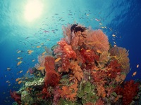 Underwater World picture G338816