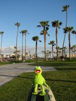 the Frog Kermit picture G531133