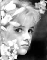 Sue Lyon picture G634477