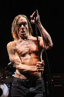 Iggy Pop picture G810098