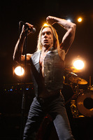 Iggy Pop picture G810110