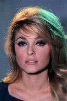 Sharon Tate picture G840257