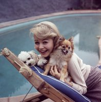 Sandra Dee picture G913904