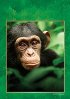 Chimpanzee movie poster (2012) picture MOV_02118d74