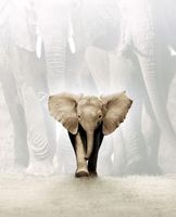 Whispers: An Elephant's Tale movie poster (2000) picture MOV_05e3dbba