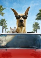 Marmaduke movie poster (2010) picture MOV_10634ebe