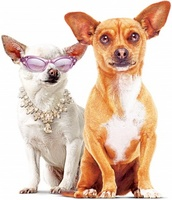 Beverly Hills Chihuahua movie poster (2008) picture MOV_19336d00