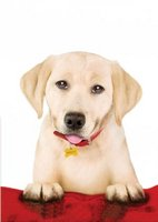 Marley & Me: The Puppy Years movie poster (2011) picture MOV_21680e70
