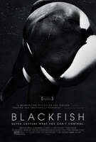 Blackfish movie poster (2013) picture MOV_242be21f