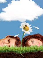 Pushing Daisies movie poster (2007) picture MOV_30178a42