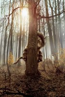 Where the Wild Things Are movie poster (2009) picture MOV_31aeaee7