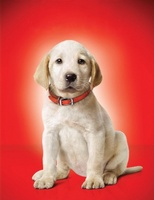 Marley & Me movie poster (2008) picture MOV_4e56a16d