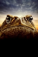 Cane Toads: The Conquest movie poster (2009) picture MOV_64f9b38a