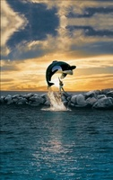 Free Willy movie poster (1993) picture MOV_7ddb8c16