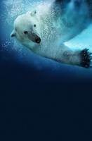 Polar Bears: Spy on the Ice movie poster (2010) picture MOV_88f30ed9
