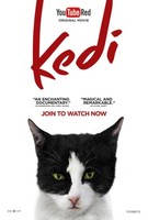 Kedi movie poster (2017) picture MOV_yqn9srzp