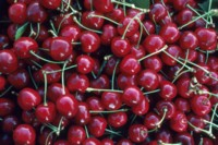 Cherry picture PH10012875