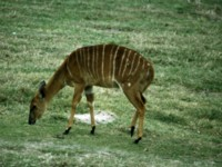 Antelope & Gazelle picture PH10897946
