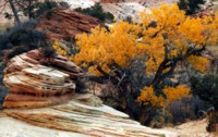 Zion National Park picture PH14491759