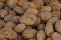 Potatoes picture PH14505473