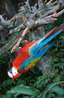 Parrot picture PH15619928
