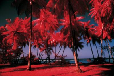 Caribbean poster PH7246918