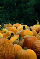 Pumpkin picture PH7698892