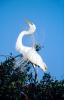 Egret picture PH7299378