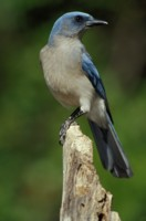 Jays picture PH7309466