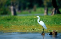 Egret picture PH7312394