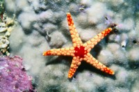StarFish picture PH7356732