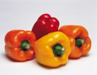 Peppers & Chiles picture PH7436397