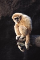 monkey picture PH7445011