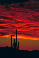 Saguaro National Park picture PH7450405