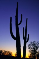 Saguaro National Park picture PH7450475