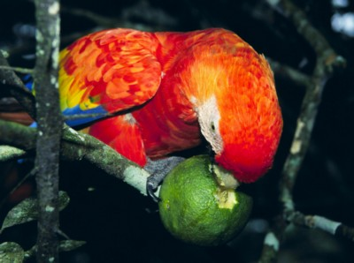 Macaw poster PH7450756