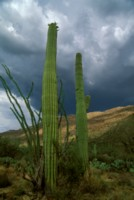 Saguaro National Park picture PH7453319