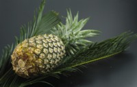 Pineapple picture PH10036936
