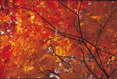 Autumn poster PH7581167