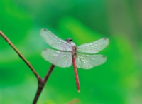 Dragonfly picture PH7593498