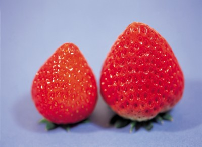 Strawberry poster PH7642999