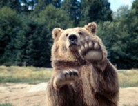 Brown Bear picture PH7648561